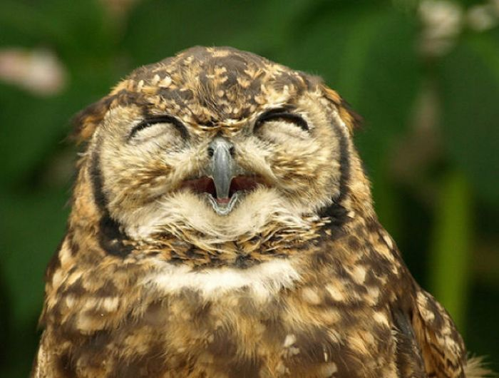 The USA has the scoop of the first 'owl' with a suspended drivers license for drunken driving.