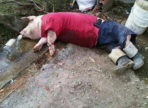 Greedy pig.