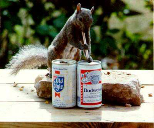 Squirrels are highly intelligent creatures.