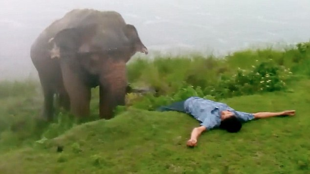 Sri Lankan drunkard takes a moment of rest before picking a fight with thiskiller elephant.