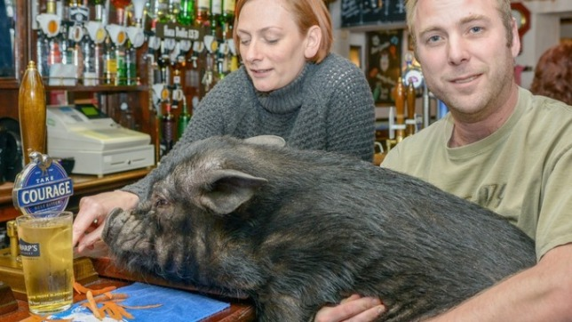 Micro-pig Frances Bacon with her owners Vicky and Ian Taylor.