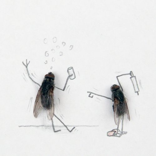 Flies love boozing just as much as the next one.