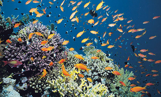 It's possible to support the conservation of the Great Barrier Reef by drinking beer.